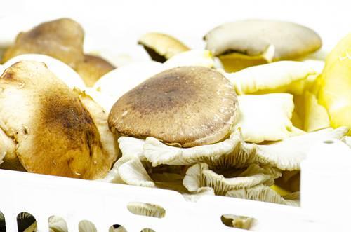 Funghi Freschi  Misti - Az. Agr. Begnoni