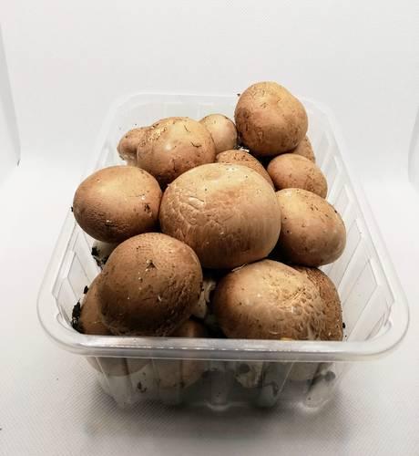Funghi Champignon  Crema - Az. Agr. Begnoni