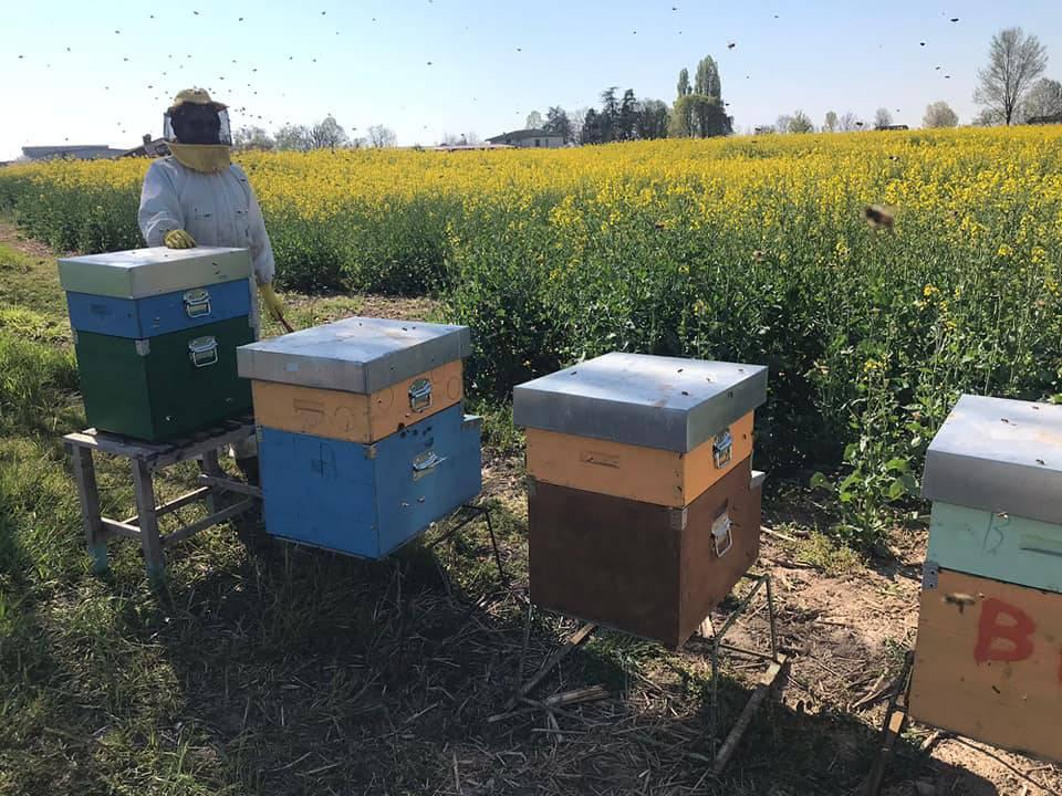 Dall'8 febbraio c'è anche l'azienda l'apicoltura Bee-Fruit