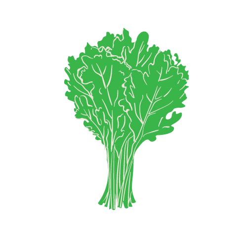 Cavolo riccio verde - Az. Agr. Bodini Emanuele