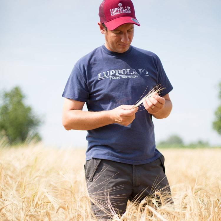 Dal campo alla cantina: l'Agribirrificio