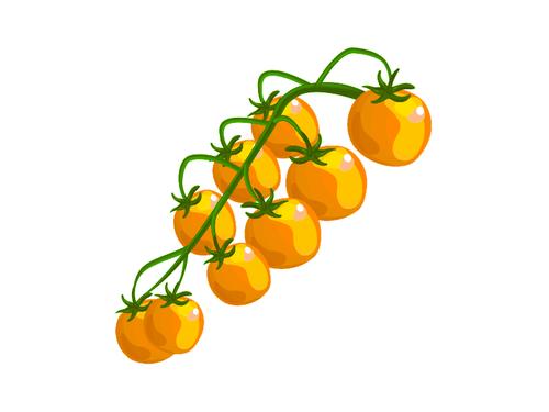 Pomodorini Datterino Giallo - Az. Agr. La Maldura