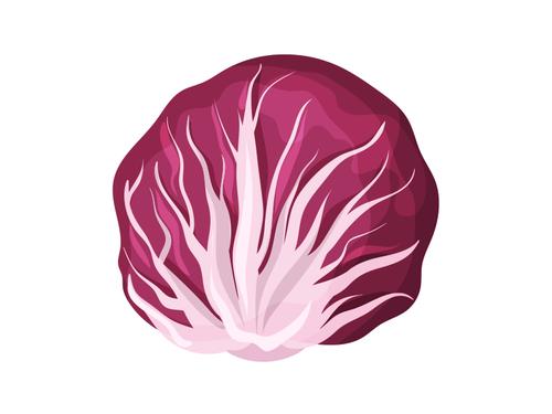 Radicchio rosso dolce di Verona -  Az. Agr. Maldura